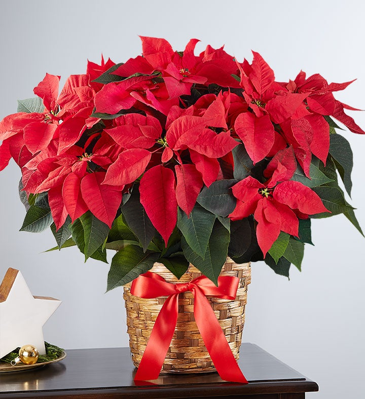 ... Flower Baskets, Mini Christmas Tree Arrangements, Same Day Delivery