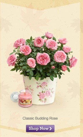 There are 12 1-800-FLOWERS.COM coupon codes and free shipping code.Shop with a ProFlowers coupon to get free shipping and great discounts.