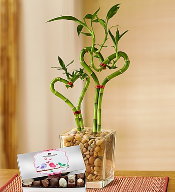 Mother's Day Heart Shaped Bamboo Plant