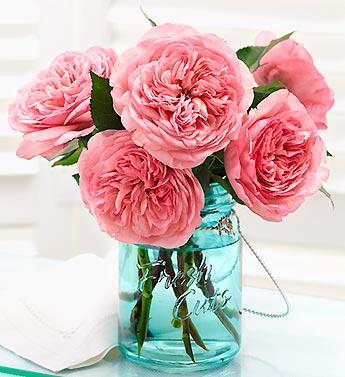 Maria Teresa Garden Roses from 1800Flowers.com