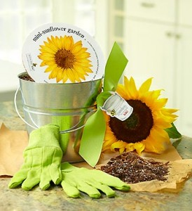 grow sunflowers with kids