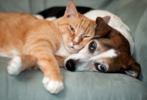 Snuggling Dog and Cat