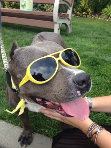 smiling dog with sunglasses