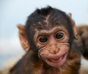 smiling baby monkey