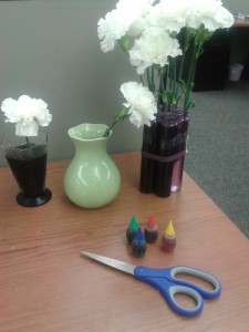 Supplies for dyeing flowers