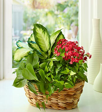 Get tips on how to keep plants alive!