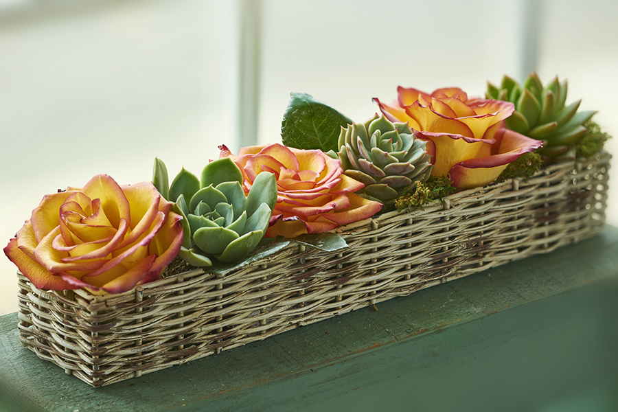 Wax roses and succulents