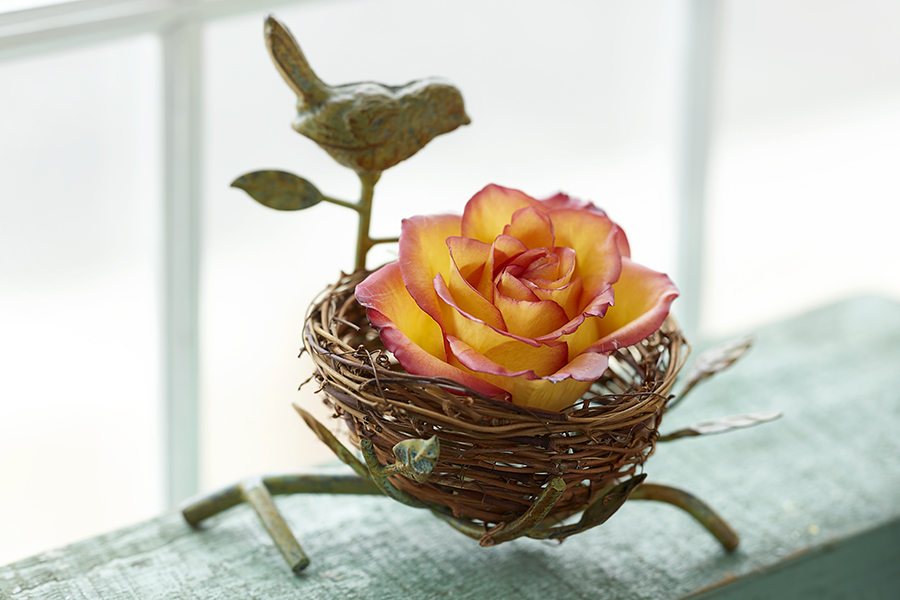 Wax rose in birds nest display