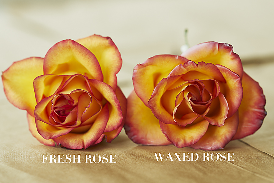 Wax rose vs. fresh rose