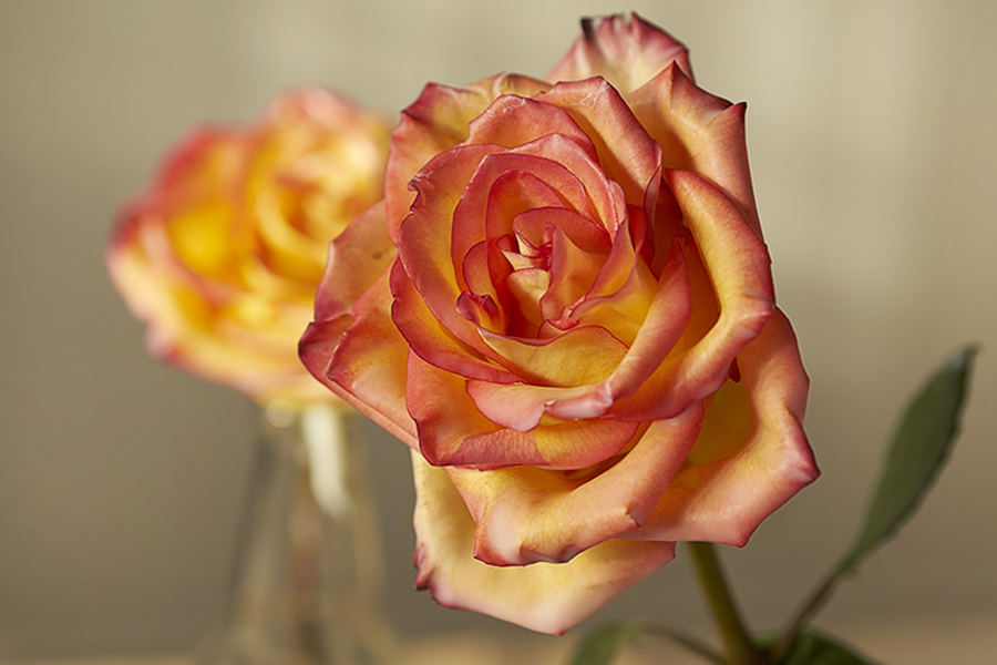 How to preserve flowers with wax wax roses petal talk i have waxed roses many times over the years using paraffin wax now that soy wax is readily available i decided to give that i try and im glad i did mightylinksfo