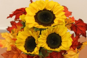 Trimmed Sunflowers for Sunflower Turkey