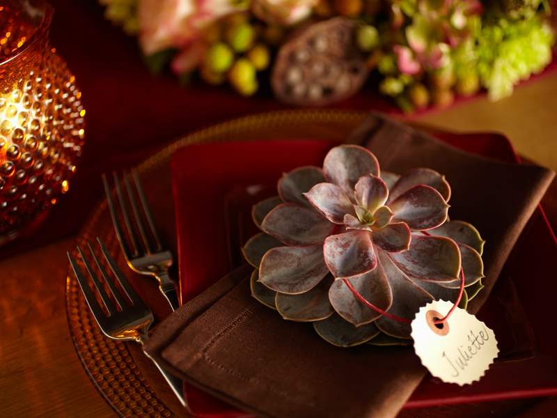 Elegant name cards for fall table settings with succulents!