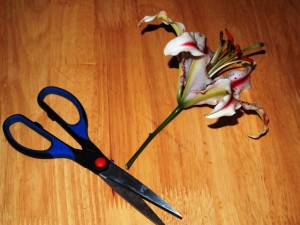 How to Trim a Flower to Make a Fresh Flower Ornament