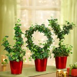 Joy to the World Ivy Topiary