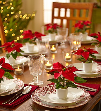 Poinsettia-party-pack-40035
