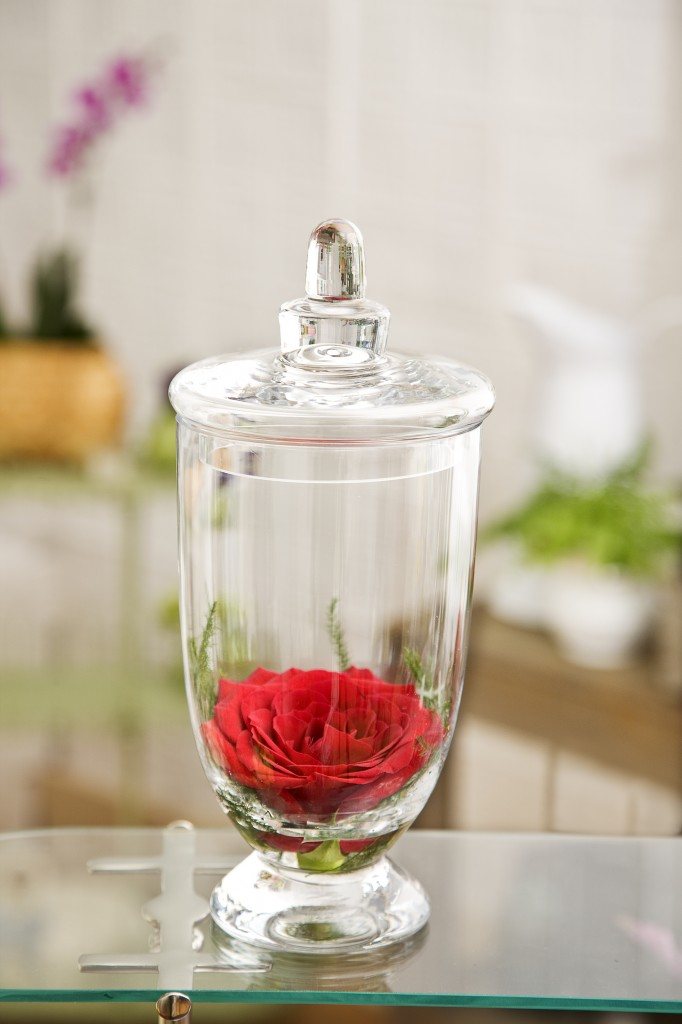 Rose in Glass Apothecary Jar