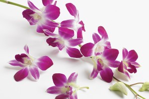 stringing orchids for floral lei