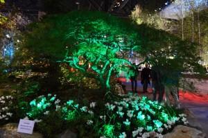 Green Flower Display