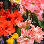 Beautiful Pink and Red Potted Flowers