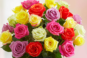 Multicolored Sorority Roses