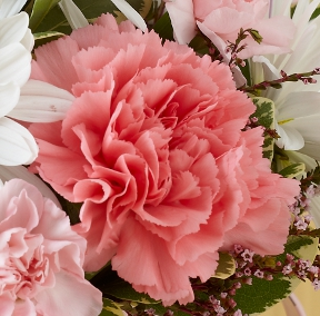 Pink Carnations for Sororities