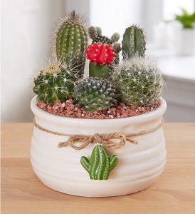 cactus-dish-garden-summer-flowers