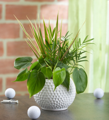 DIY Father's Day Planter in Golf Ball Ceramic Container