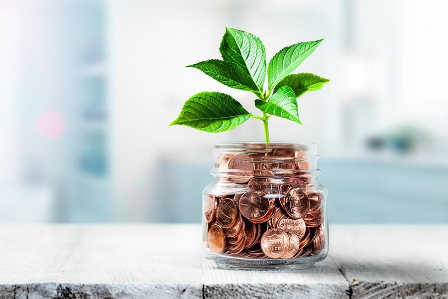money tree with actual money