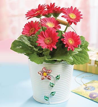 Pink Gerbera in Jeweled Planter