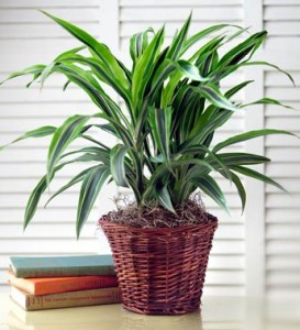 Fall Plant Care and Handling of Indoor Plants | Petal Talk