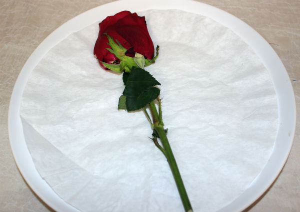 diy-pressed-flowers-plate-with-pressed-rose