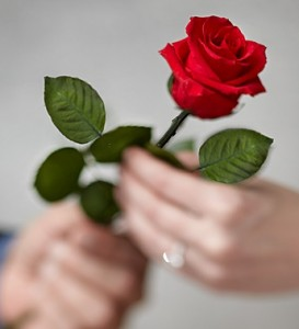 single-red-long-stem-rose