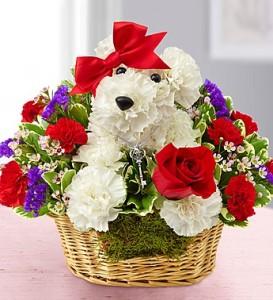 love-pup