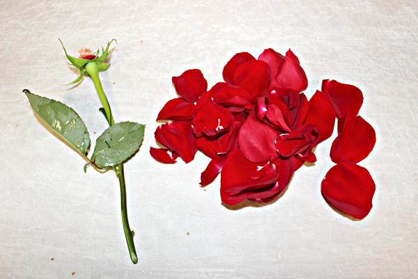 saran-wrap-flowers_petals
