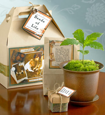 seeds-of-life-tree-kit