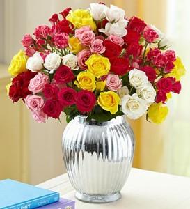 50-50-spray-roses
