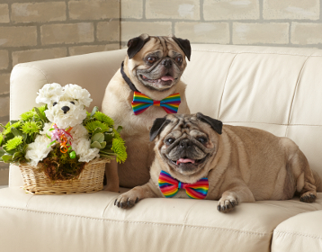 Max the Rescue Pug and Mr. Bojangles with the Party Animal™a-DOG-able®