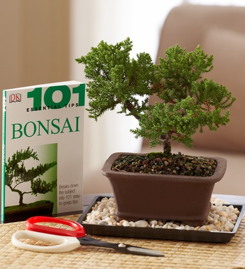 bonsai-beginners-set-101280
