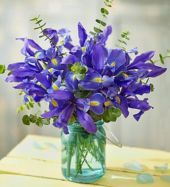 iris-eucalyptus-140994