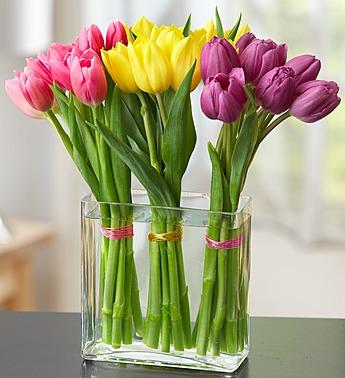 modern-tulips-105241
