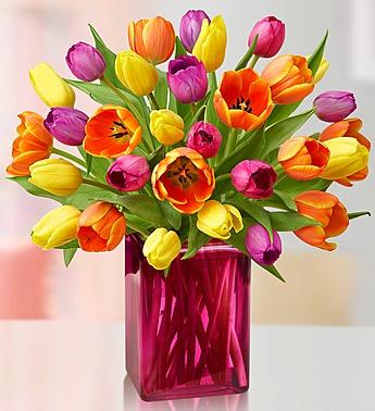 assorted-tulips-pink-vase