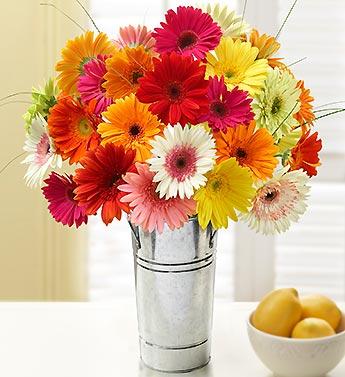 happy-gerbera-daisies