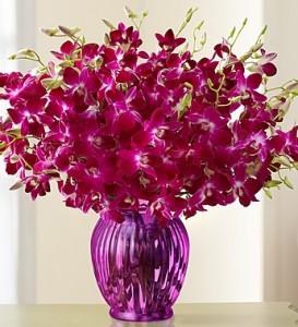 Exotic Breeze™ Orchids, 15-30 Stems
