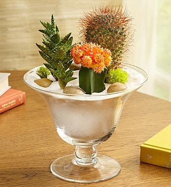 all-about-1800flowers-local-exclusive-program-desert-vista-bouquet
