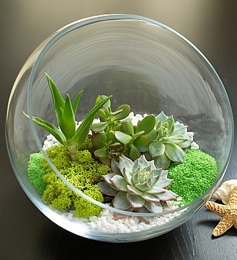 local-exclusive-flowers4giftseattle-home-sweet-desert-terrarium