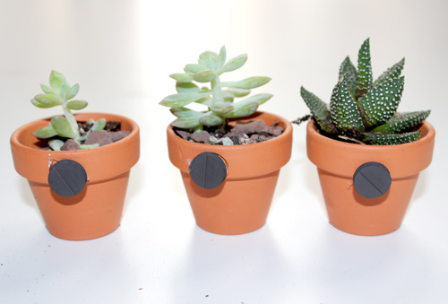 diy-succulent-magnets-attach