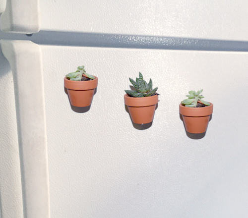 diy-succulent-magnets-on-refrigerator