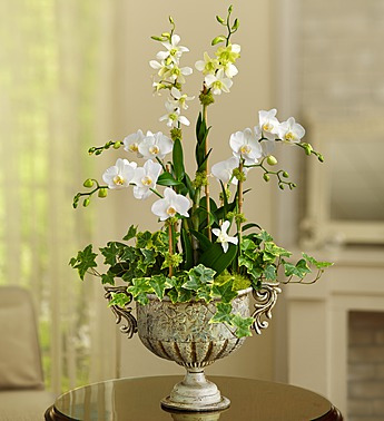flowers-that-come-in-white-orchid