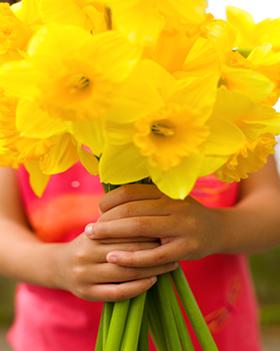 daffodil-days