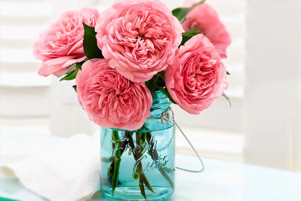 garden-roses-fresh-cuts